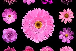 Mix collage of pink flowers isolated
