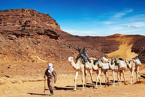 Camels caravan, Sahara Desert