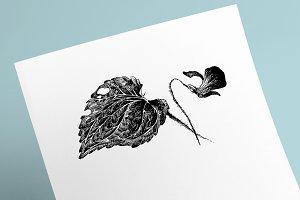 Flower Violet Sketch