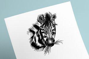 African Zebra Sketch
