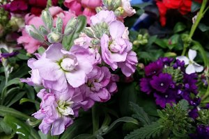 Mother's Day Flowers I