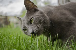 Wild cat and green grass