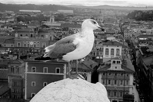 Seagull on rock in European capital
