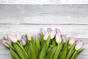 Floral Styled Stock Photo Tulips