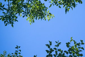 Green tree leaves against blue sky