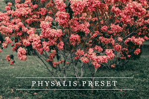 Physalis - Lightroom preset