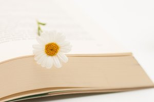 Flower and book #7