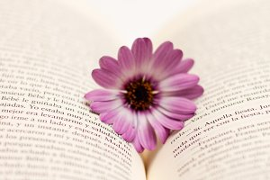 Flower and book #5