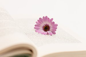 Flower and book #1