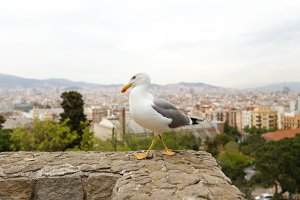 Seagull standing on stone edge