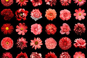 30 flowers isolated on black
