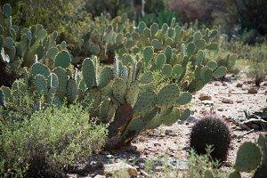 Sunny day in Sonoran desert