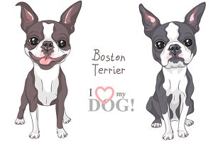 Dog Boston Terrier SET