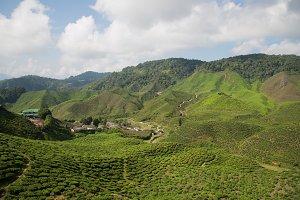 Malaysian Highland Tea Farms