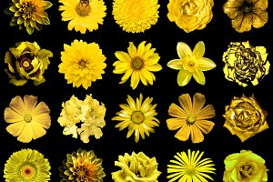 20 gold flowers isolated on black