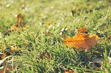 Fall is here. Leaf on the grass.
