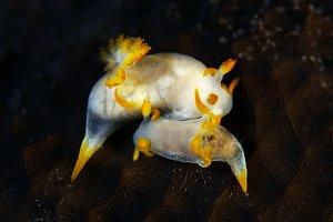Seaslug love