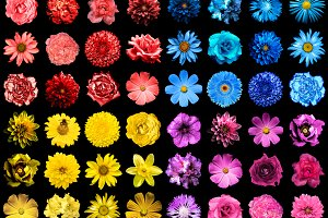 Pack of 64 flowers isolated on black