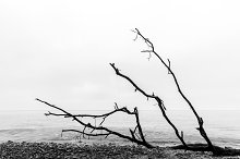 Broken tree branches on the beach.