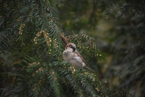 Birdie sitting