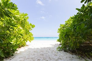 Bush, sand and sea