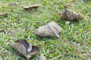 Dry leaves on the lawn