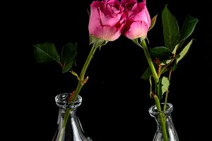 Rose in glass contemporary vase