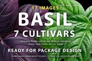 Basil, 7 cultivars