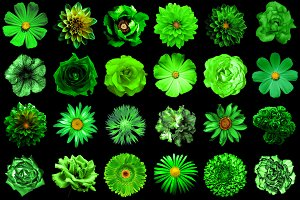 24 green flowers isolated on black