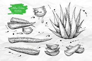 Aloe Vera Set. Botanical Drawings