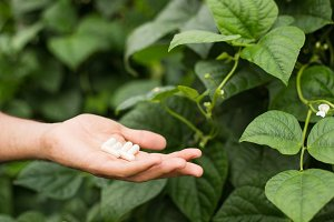 Homeophatic pills