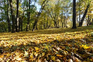 Carpet of autumn leaves in park.