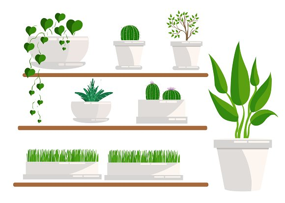 Set of houseplant. isolated on white