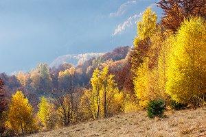 Autumn mountain slope.