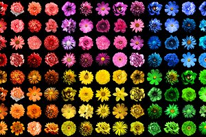 Mega pack of 120 flowers isolated