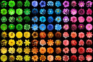 Mega pack of 96 flowers isolated
