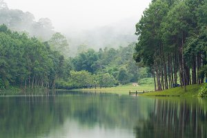 Lake in pine forests
