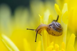 Close up Snail on flowers