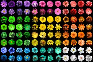 Mega pack of 144 flowers isolated