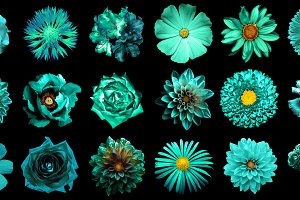 18 turquoise flowers isolated
