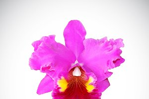 Vector image of orchid flower
