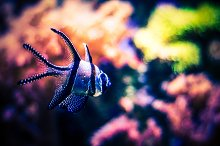 Tropical Fish Underwater