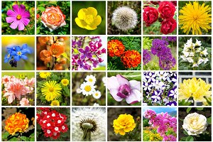 Collage of 36 flowers photos