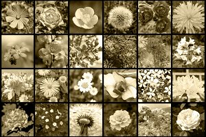 Collage of 36 flowers photos retro