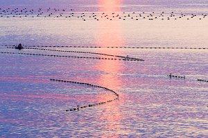Sunrise and Fishing Nets