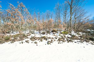 Winter landscape in a sunny day