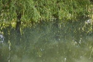 Reflecting fog pond