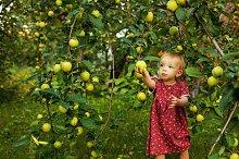 Little cute girl near apple tree