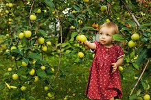 Little girl barefoot near apple tree