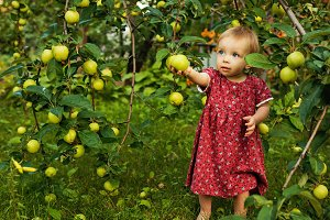 Little girl barefoot near apple tree